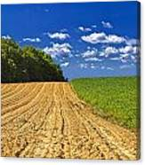 Agricultural Landscape - Young Corn Field Canvas Print