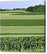 Agriculture - Contour Strips Of Mid Canvas Print