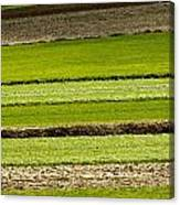 Agriculture Layers Fields And Meadows Canvas Print