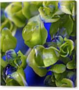 Ahhh Hydrangea Canvas Print