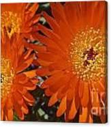 Orange Burst Akuli Kuli Canvas Print