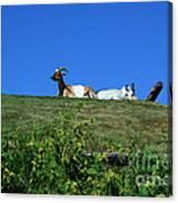Al Johnsons Resturant Goats Canvas Print