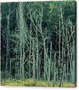 Alabama Autumn Marsh Canvas Print