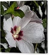Alabama Wildflower -  Woolly Rose Mallow Canvas Print