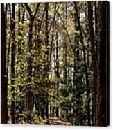 Alabama Woodlands In Spring 2013 Canvas Print