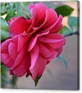 Alabama's Fading Camelia Canvas Print