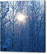 Alaska Sunrise Illuminating Through Birches And Willows Canvas Print