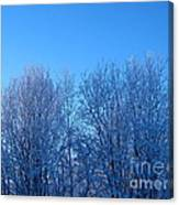 Alaska Sunrise Lighting Willows In Winter Canvas Print