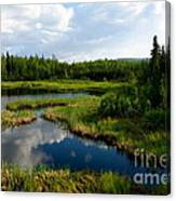 Alaskan Backyard Canvas Print