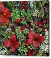 Alaskan Berries 1 Canvas Print
