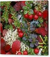 Alaskan Berries 2 Canvas Print