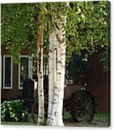 Alaskan Birch Canvas Print
