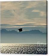 Alaskan Eagle At Sunset Canvas Print