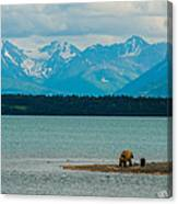 Alaskan Grizzly And Spring Cub Canvas Print