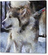 Alaskan Malamute Photo Art 09 Canvas Print