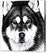 Alaskan Malamute Portrait Canvas Print