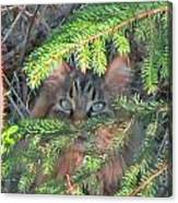 Alaskan Wild Cat Canvas Print