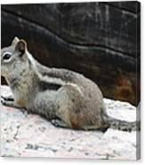 Albert Squirrel Canvas Print