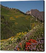 Albion Basin Summer Canvas Print