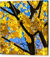 Alchemy Of Nature - Refining The Sungold Canvas Print