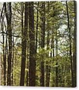 Aldridge Lake Trail Canvas Print