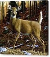 Whitetail Deer - Alerted Canvas Print