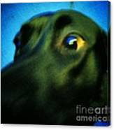 Alex Has A Dog Canvas Print