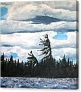 Algonquin Kawawaymog Wendy's Tree Canvas Print