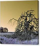 Alien Landscape 2 Canvas Print