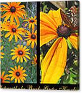 All About Black-eyed Susans Canvas Print