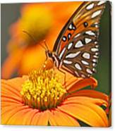 All About Orange 3236 3 Canvas Print