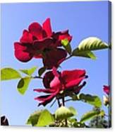 All About Roses And Blue Skies Iv Canvas Print