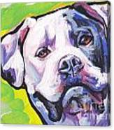 All American Bully Canvas Print
