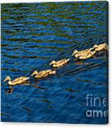All Ducks Lined Up Canvas Print