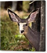 All Ears - Mule Deer Fawn - Casper Mountain - Casper Wyoming Canvas Print