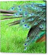 All Feathers Canvas Print