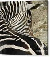 All Stripes Zebra 2 Canvas Print