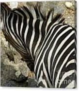 All Stripes Zebra 3 Canvas Print