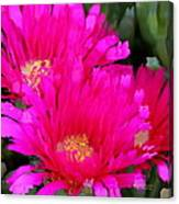 All The Flower Petals In This World 4 Canvas Print