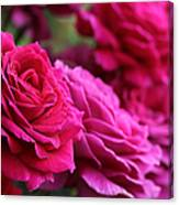 All The Fuchsia Pink Roses  Canvas Print