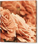 All The Orange Roses Canvas Print