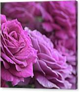 All The Violet Roses Canvas Print