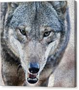 All Wolf Canvas Print