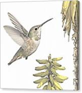 Allen's Hummingbird And Aloe Canvas Print