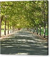 Alley Of Trees On A Summer Day Canvas Print