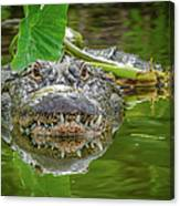 Alligator 2 Canvas Print