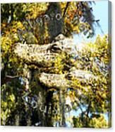 Alligator Bait Canvas Print
