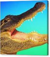 Alligator Head With Open Mouth Canvas Print