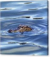 Alligator In Blue Canvas Print