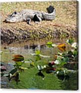 Alligator Sunbathing Canvas Print